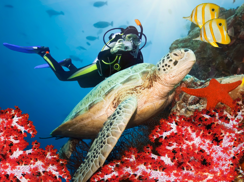 SCUBA MAGAZINE AWARDS BRITISH VIRGIN ISLANDS TOP HONORS