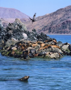 MEXICO SEA OF CORTEZ SEA LIONS BAJA YACHT CHARTER